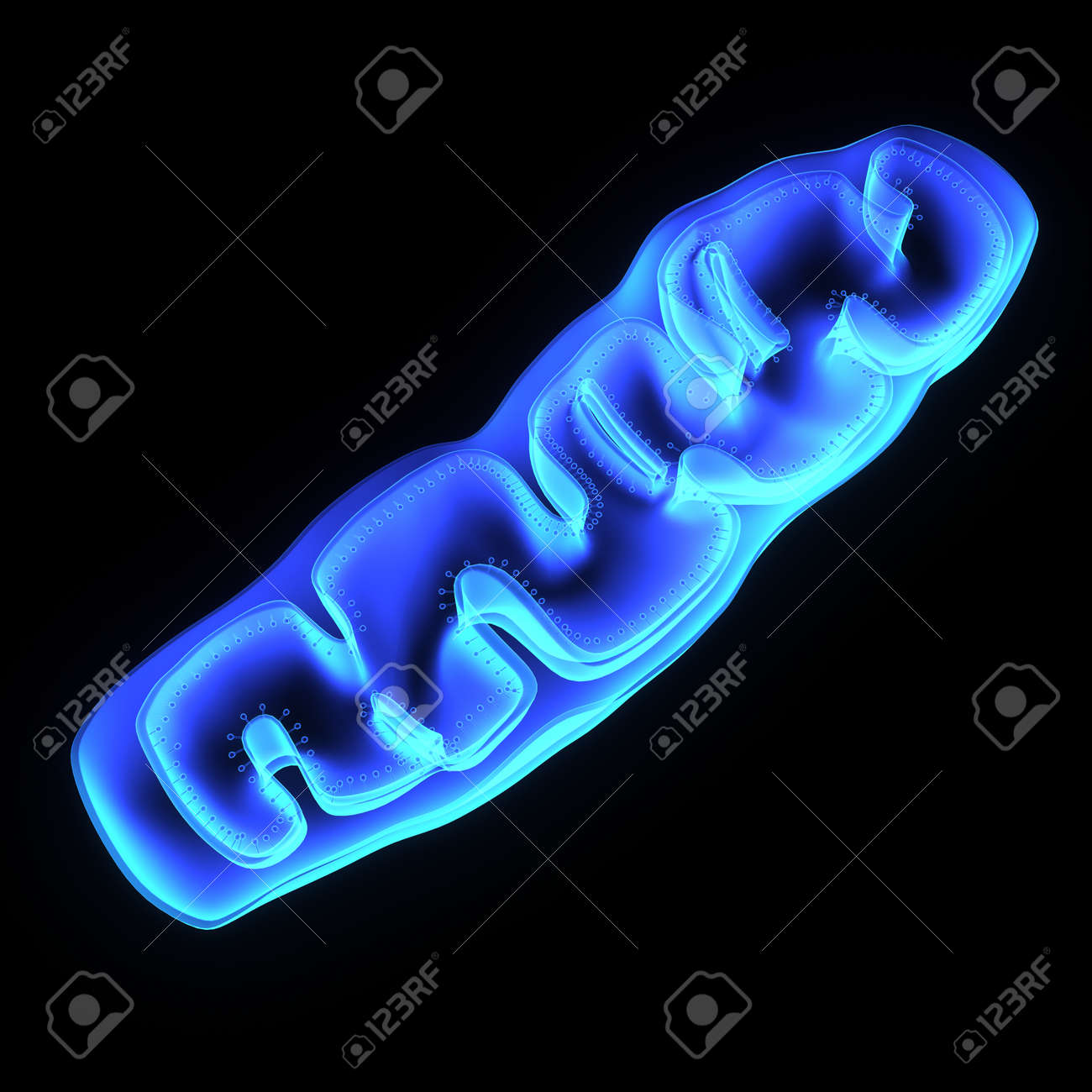 Mitochondria Stock Photo - 35799364