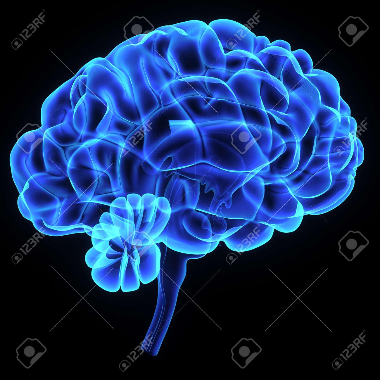 Brain Stock Photo - 36163956