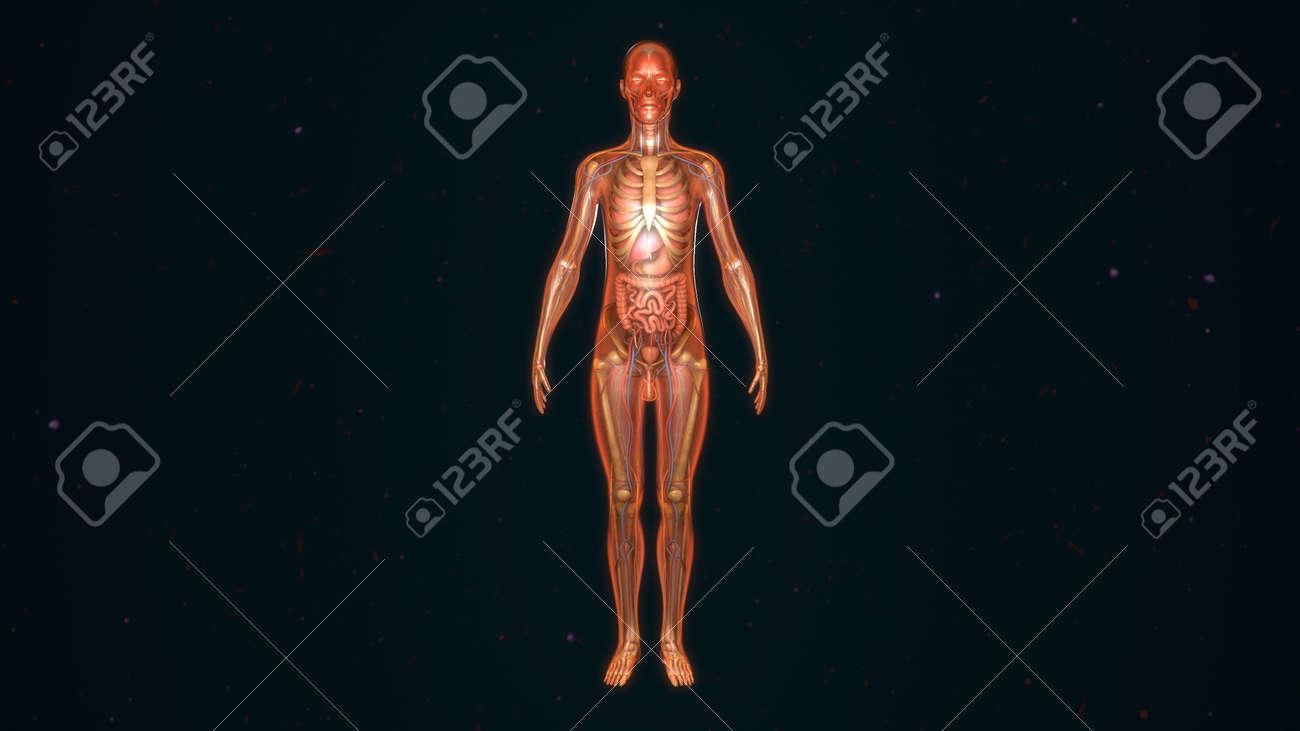 Anatomía Humana Fotos, Retratos, Imágenes Y Fotografía De Archivo ...