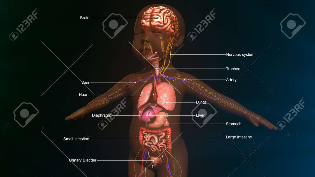 La Anatomía Del Bebé Fotos, Retratos, Imágenes Y Fotografía De ...