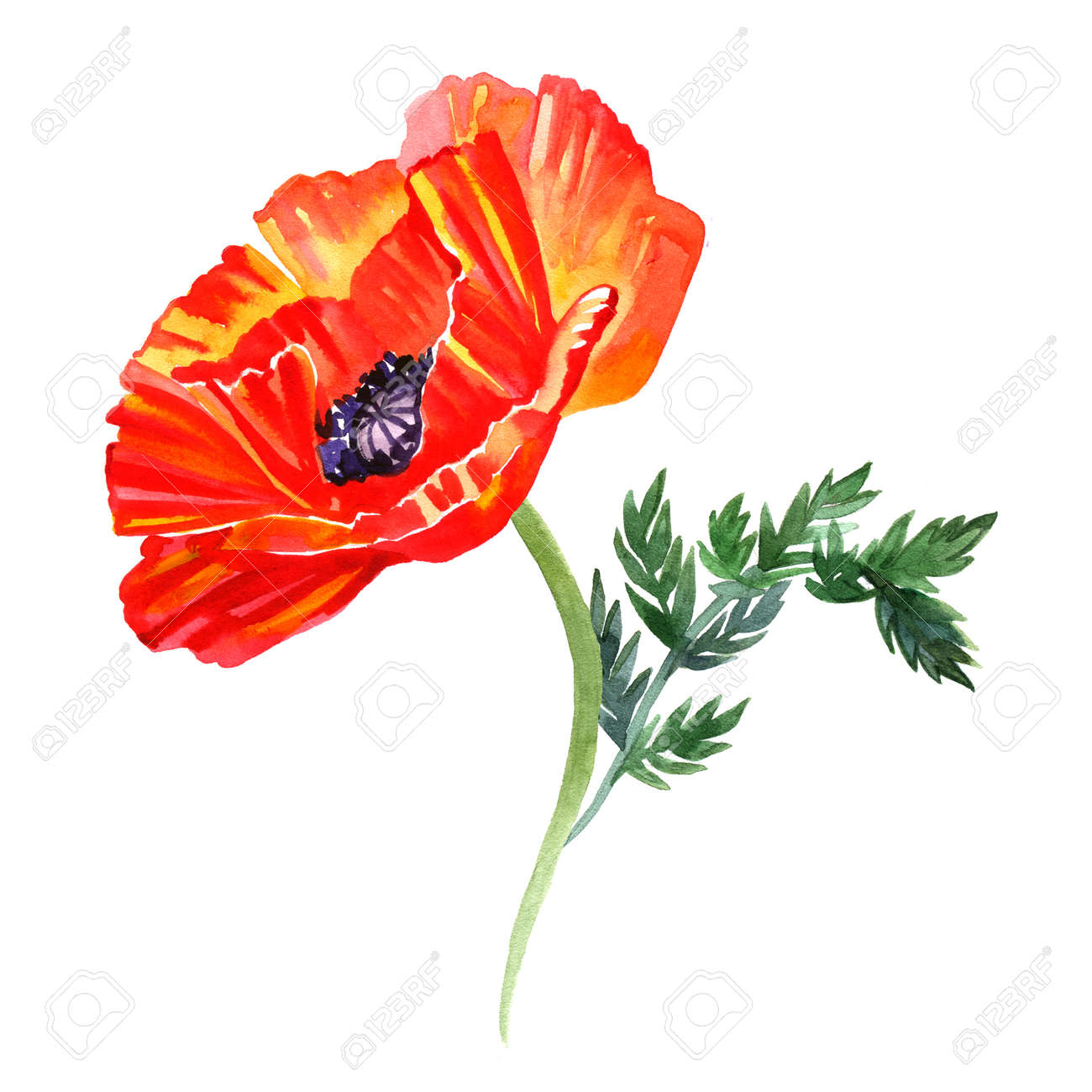 Watercolor Illustration Of Poppy Flowers Perfect For Greeting