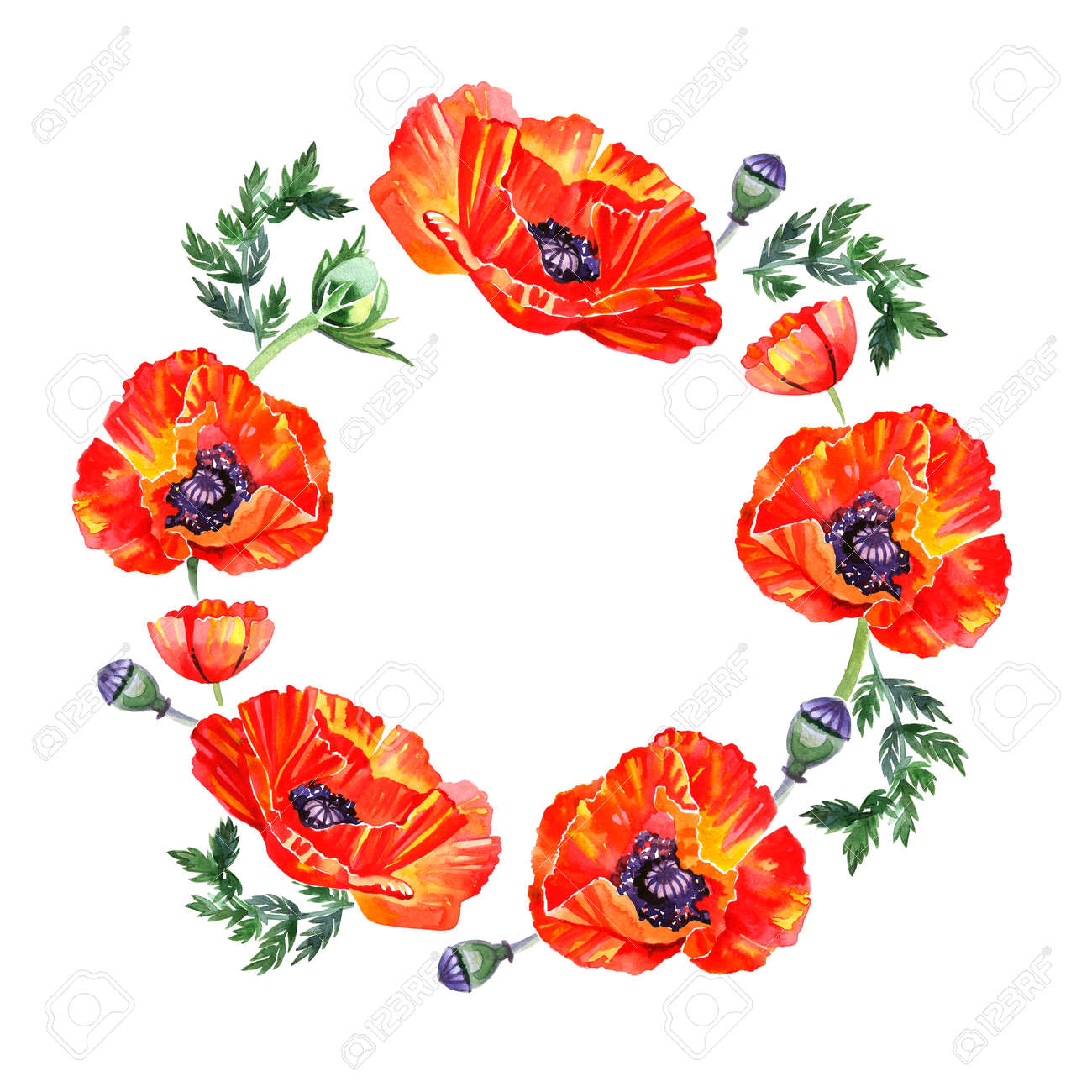 Wildflower Poppy Flower Wreath In Watercolor Style Isolated Stock