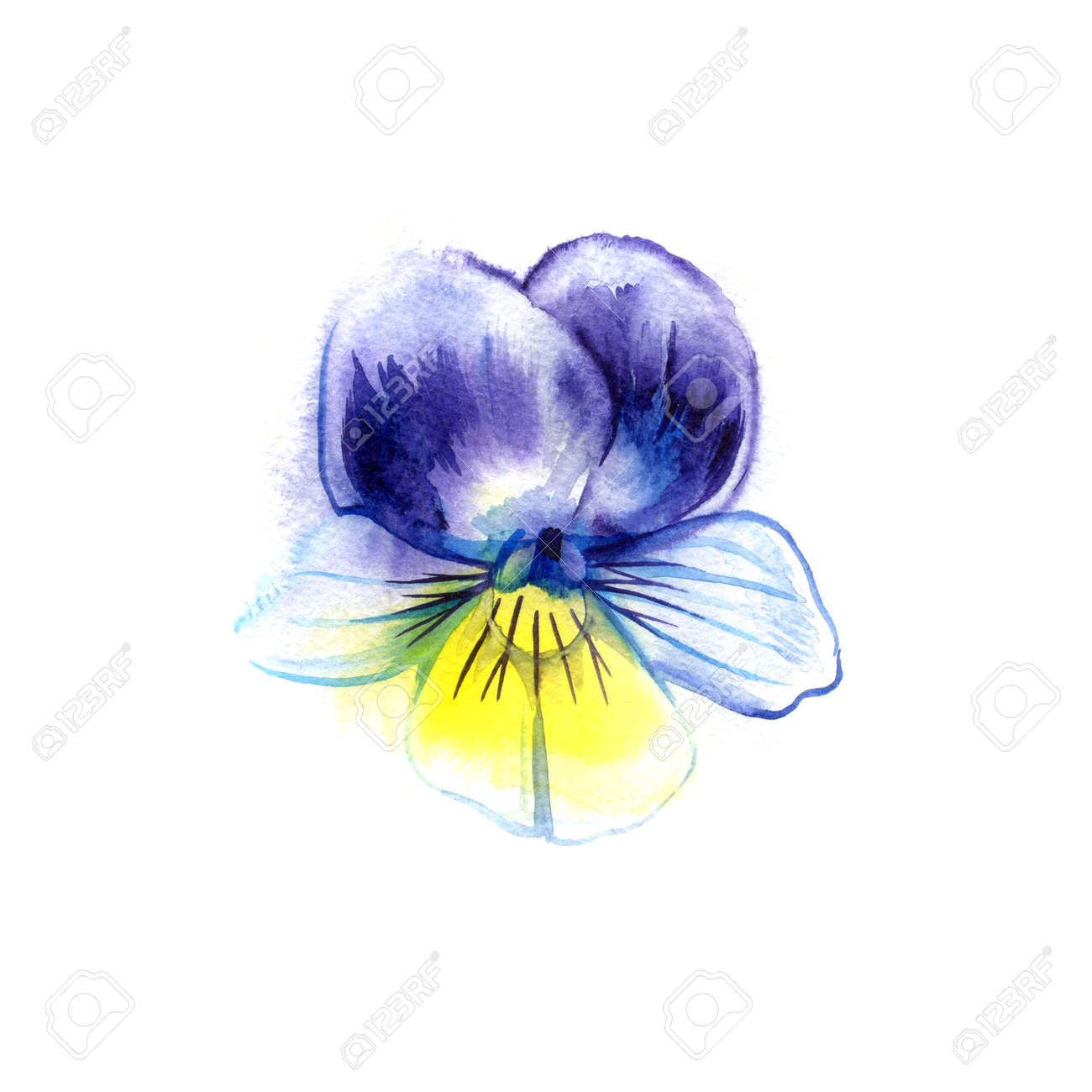 Watercolor Painting Of Pansy Flower Can Be Used As A Greeting