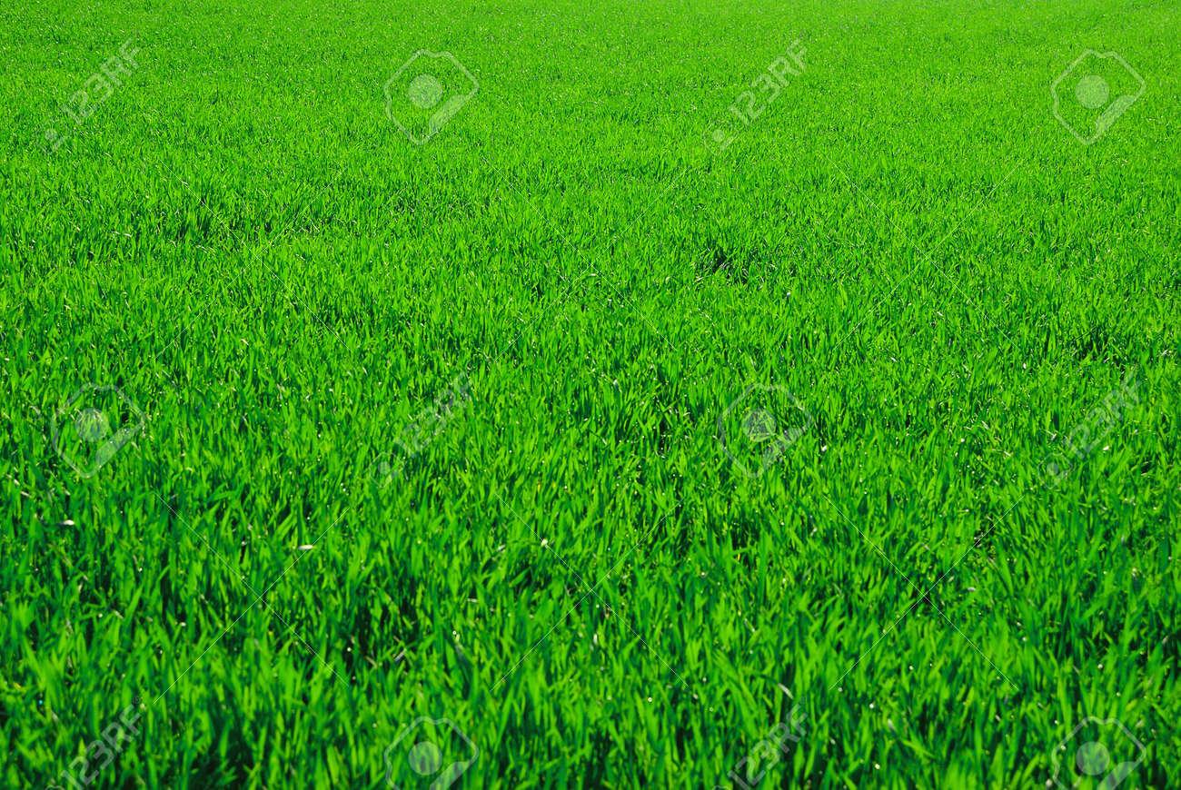 green field Stock Photo - 5369314