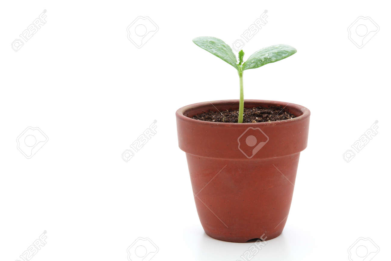 183 & Young plant in small flowerpot