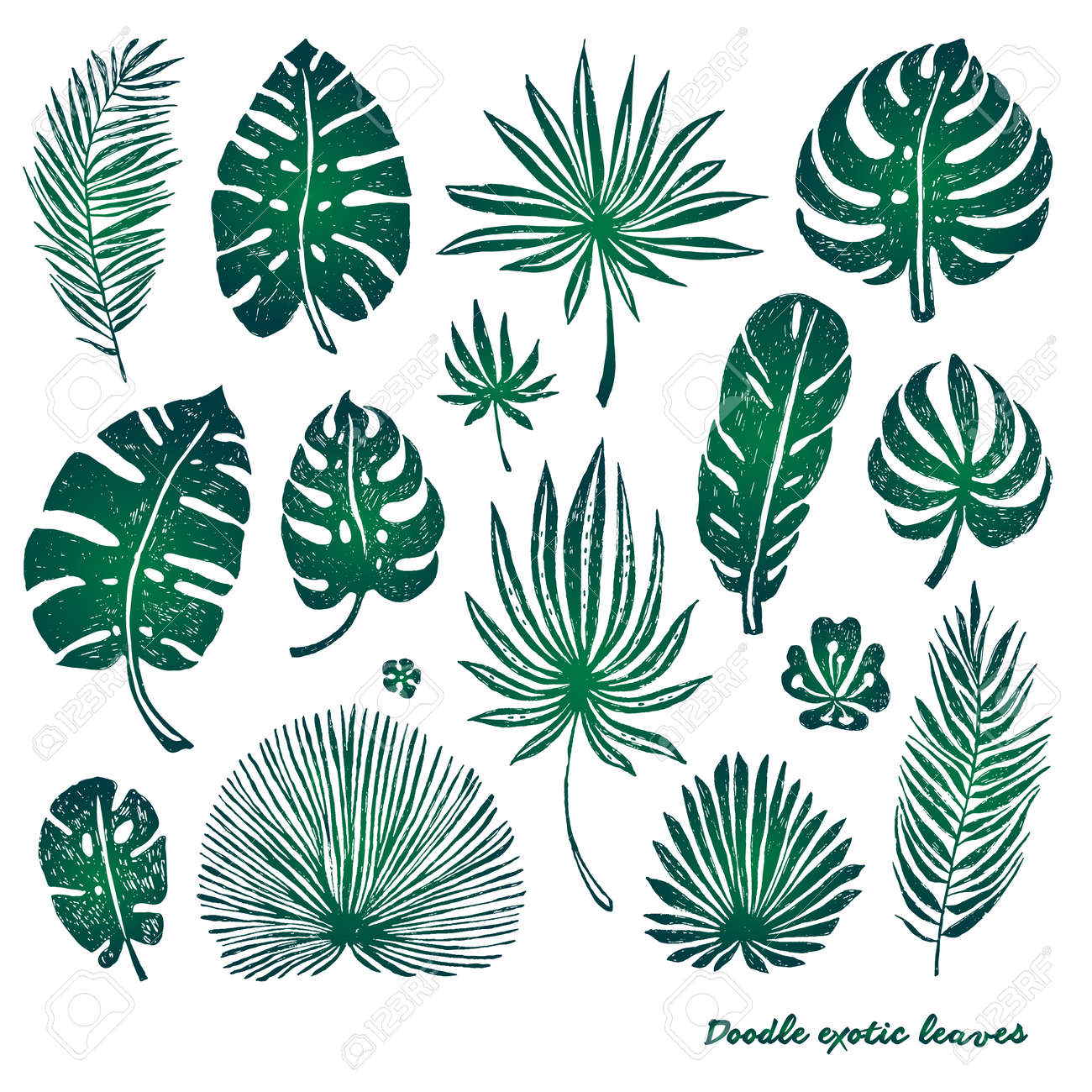 Set Of Green Doodle Exotic Palm Leaves And Plants On A White Royalty Free Cliparts Vectors And Stock Illustration Image 80501205