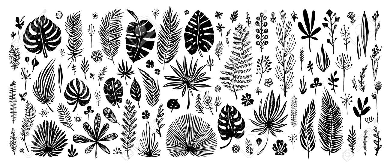 Big Set Of Black Doodle Elements Exotic Tropical Leaves On A Royalty Free Cliparts Vectors And Stock Illustration Image 103290744 To get more templates about posters,flyers,brochures summer and autumn color tropical leaf hand drawing pattern seamless. big set of black doodle elements exotic tropical leaves on a