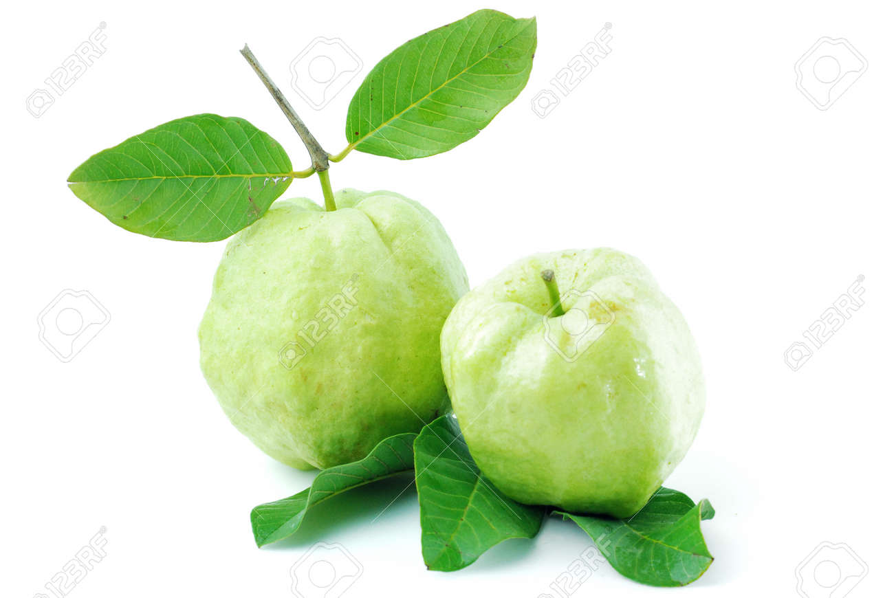 Guava Fruit Has Green Skin And White Flesh, Vitamin C Stock Photo 14698424  Guava Fruit Guava2 How To Eat Guavas