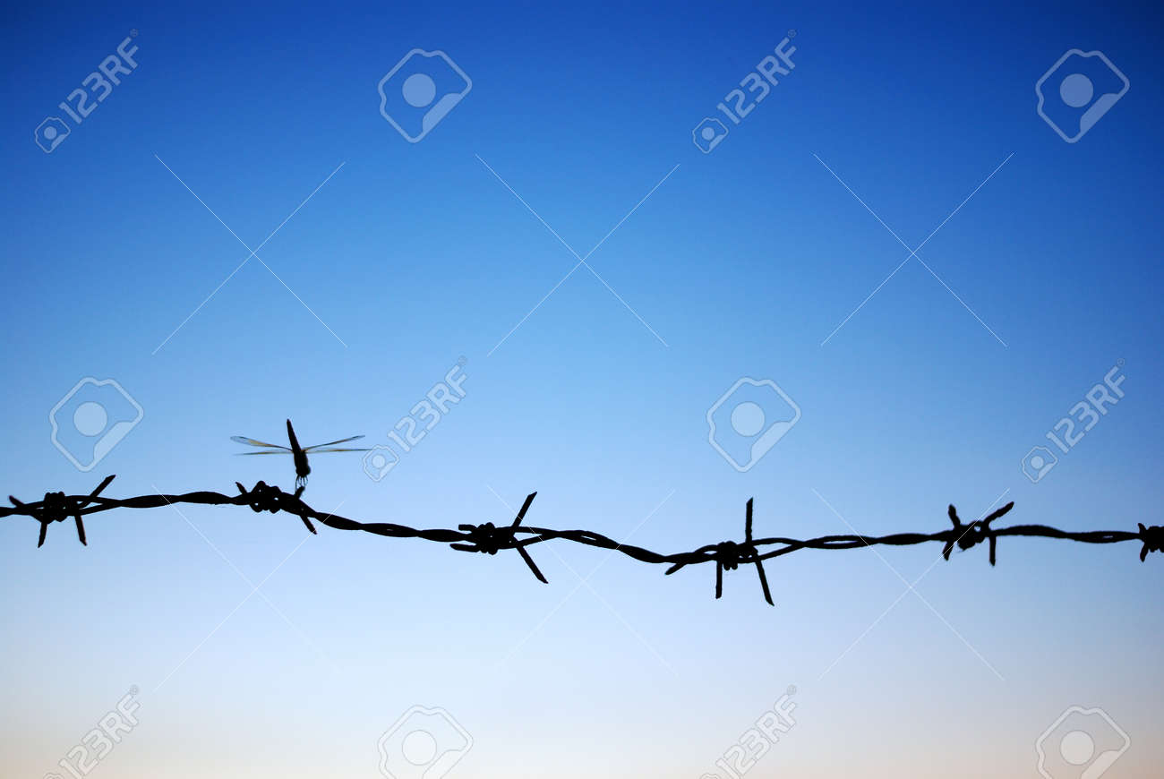 The barbed wire represents the spin independent barrier at the prison Stock Photo - 14923878