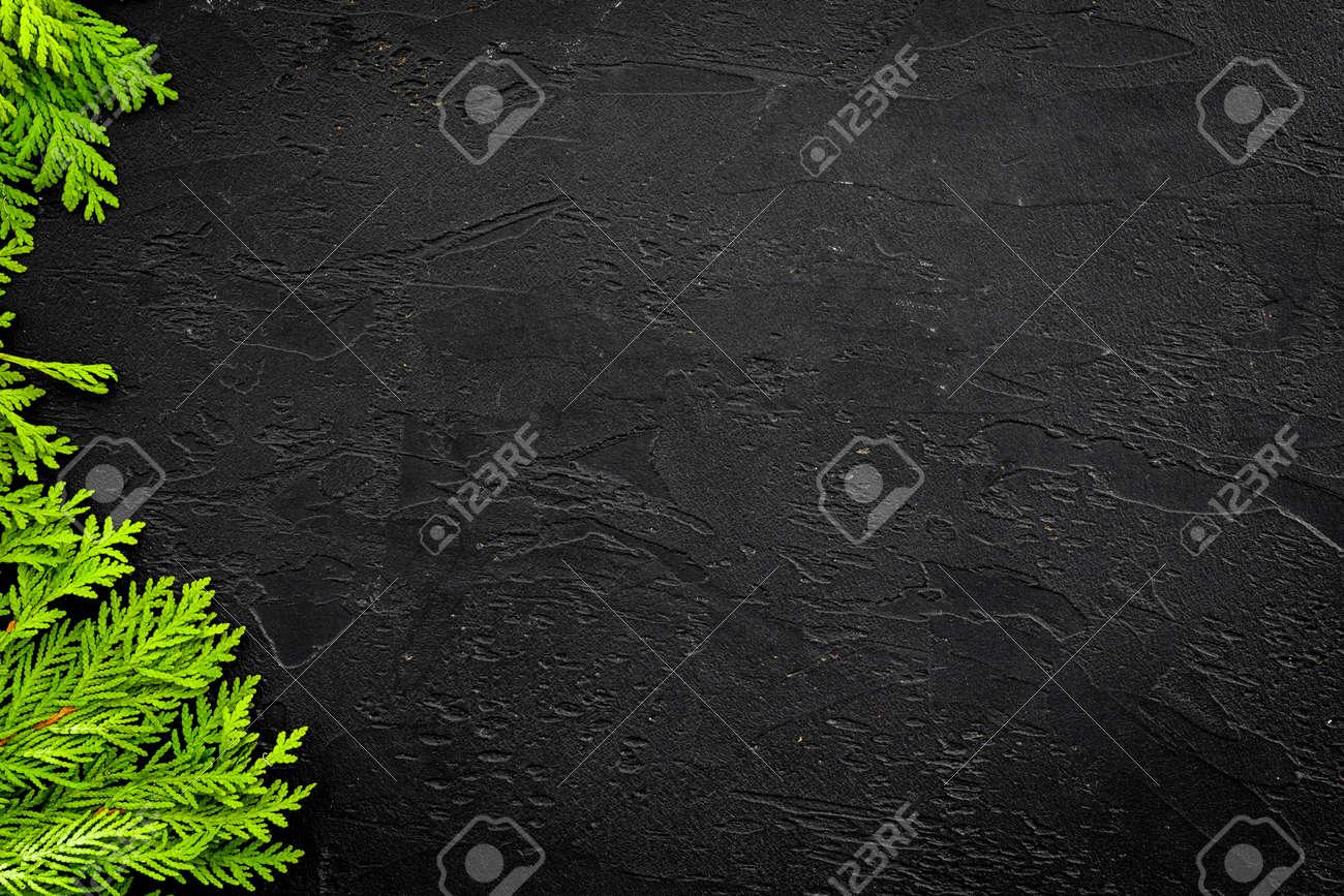 Juniper frame for poster or design. Juniper branches on black background top view. - 101485703