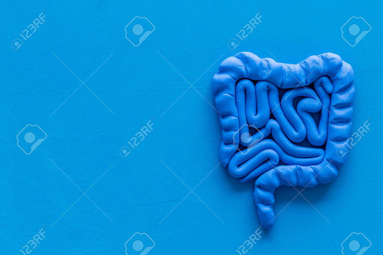 Intestines health. Guts on blue top view. - 132307306