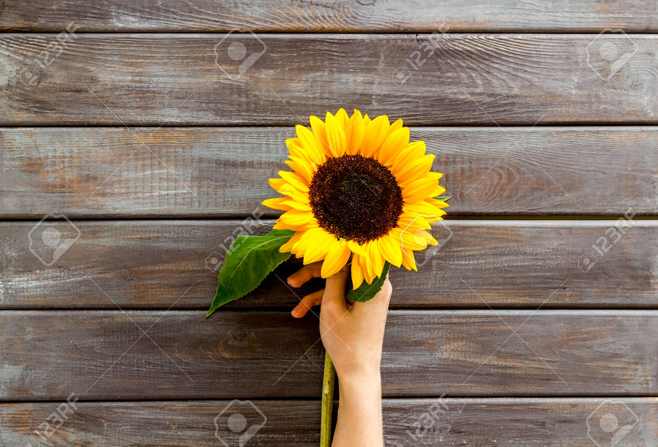 Bouquet Of Sunflowers On Dark Wooden Background Top Down Stock Photo Picture And Royalty Free Image Image 140712873