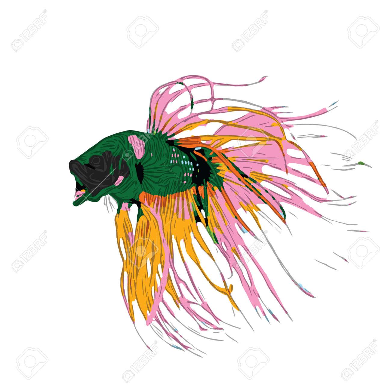 Colorful Betta Fish Vector Illustration. Siamese Fighting Fish. Betta Splendens, isolated on white background - 125682086
