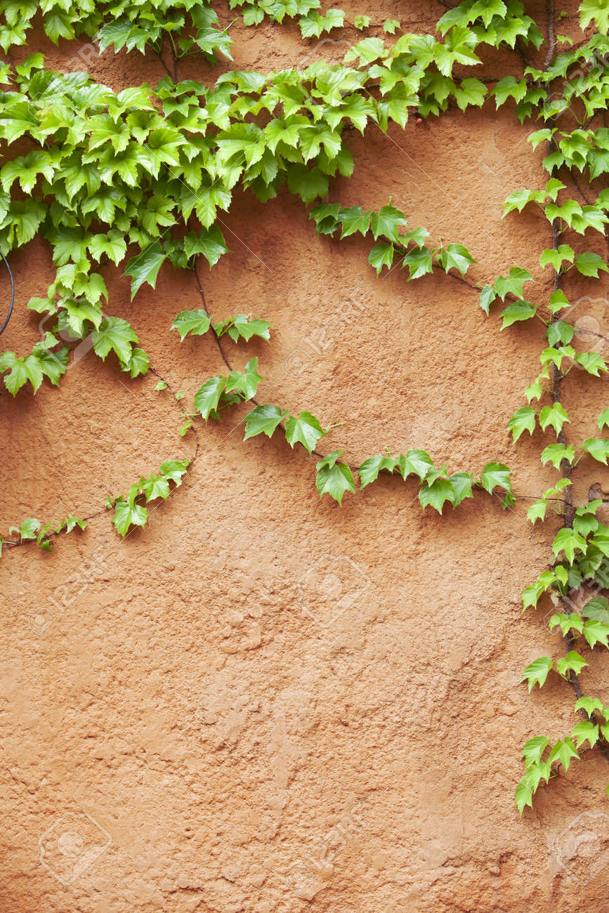 yellow concrete wall with plant Stock Photo - 9793390