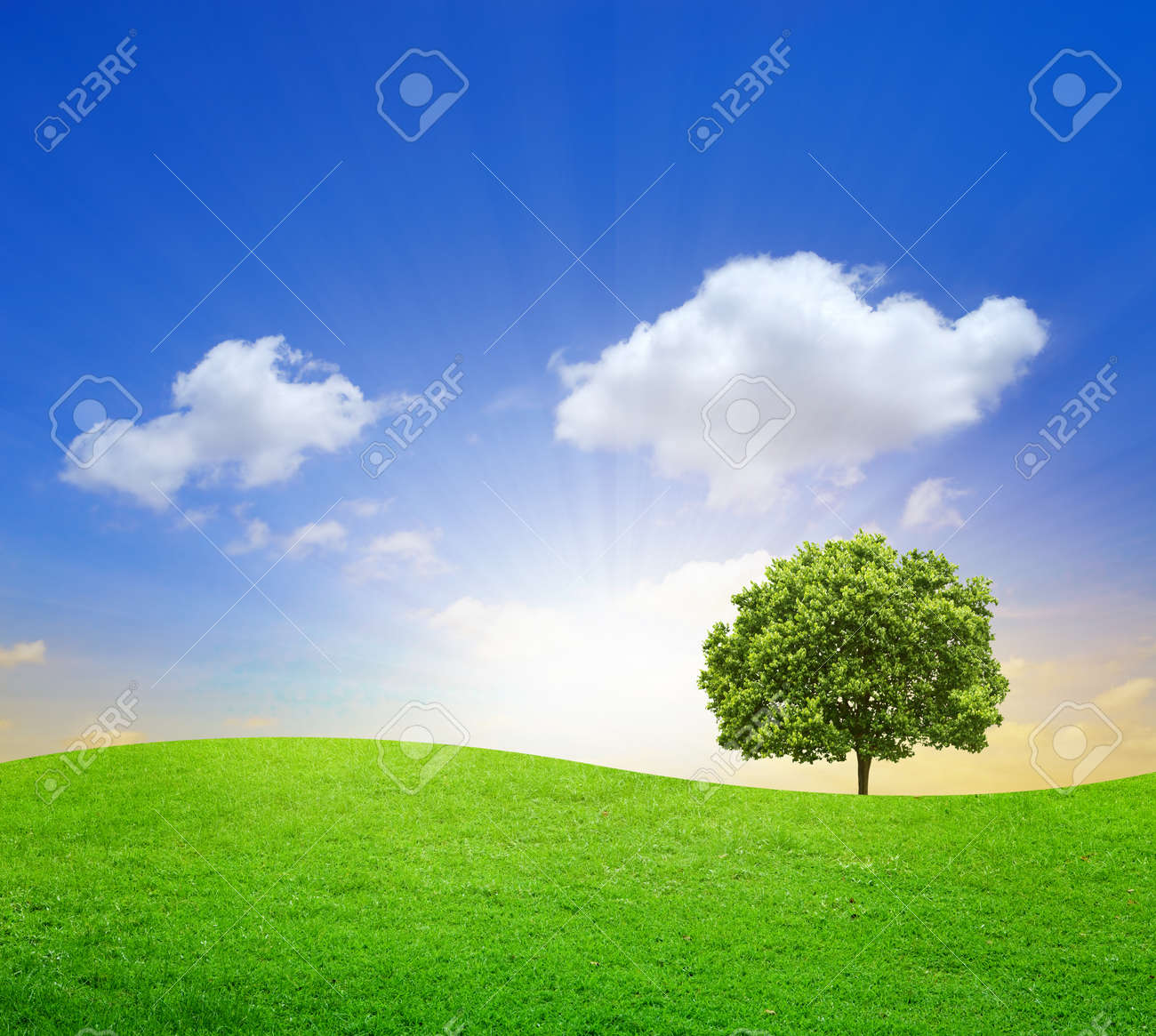 Green Field with big tree and blue sky - 9793389