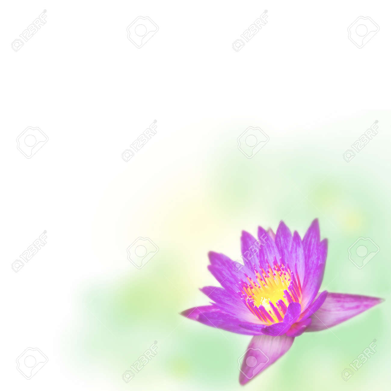 Lotus Flower Design Expandable Blank Template Border Stock Photo