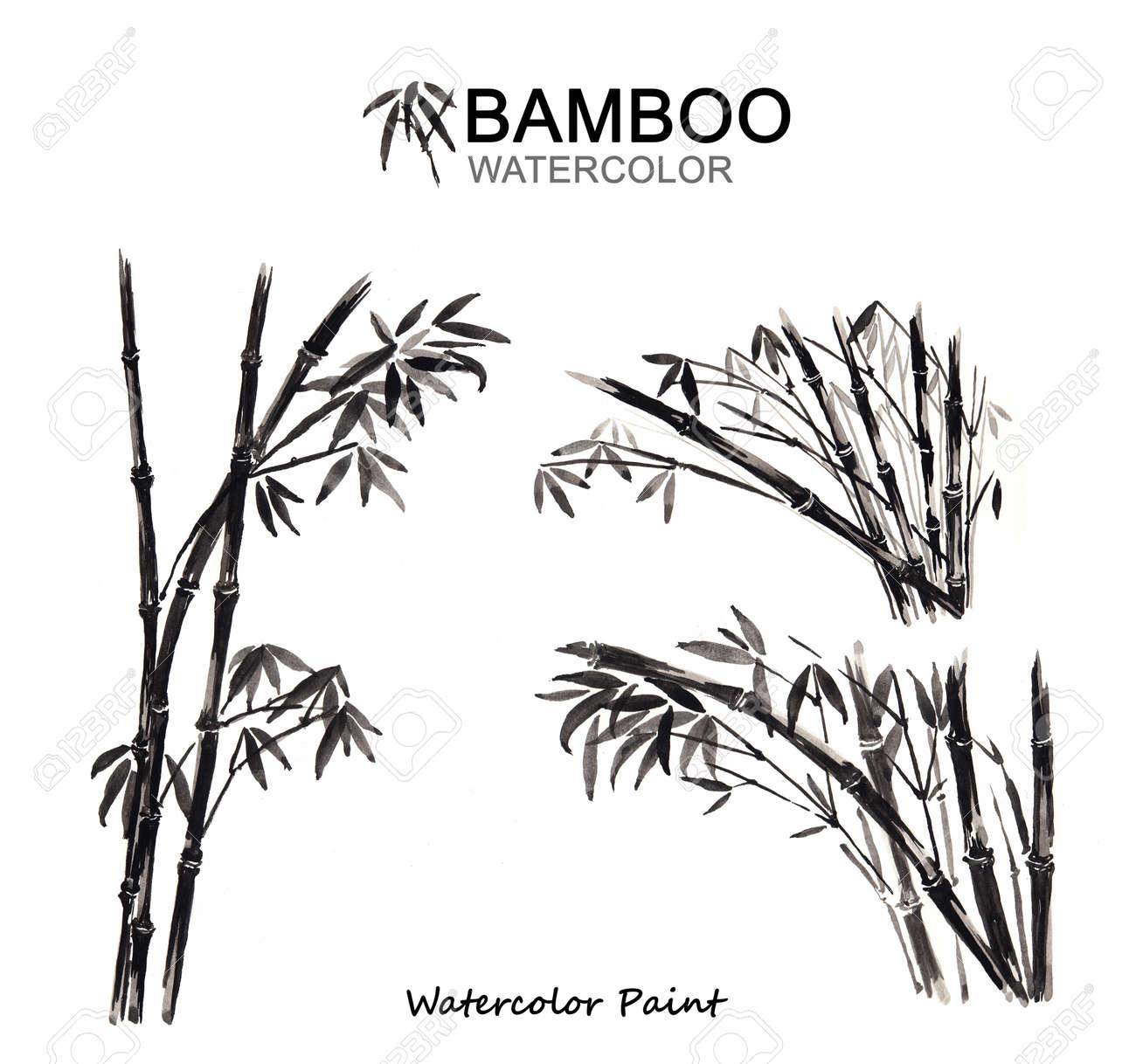 Bambus Malen Malen Aquarell Hochauflosende Lizenzfreie Fotos