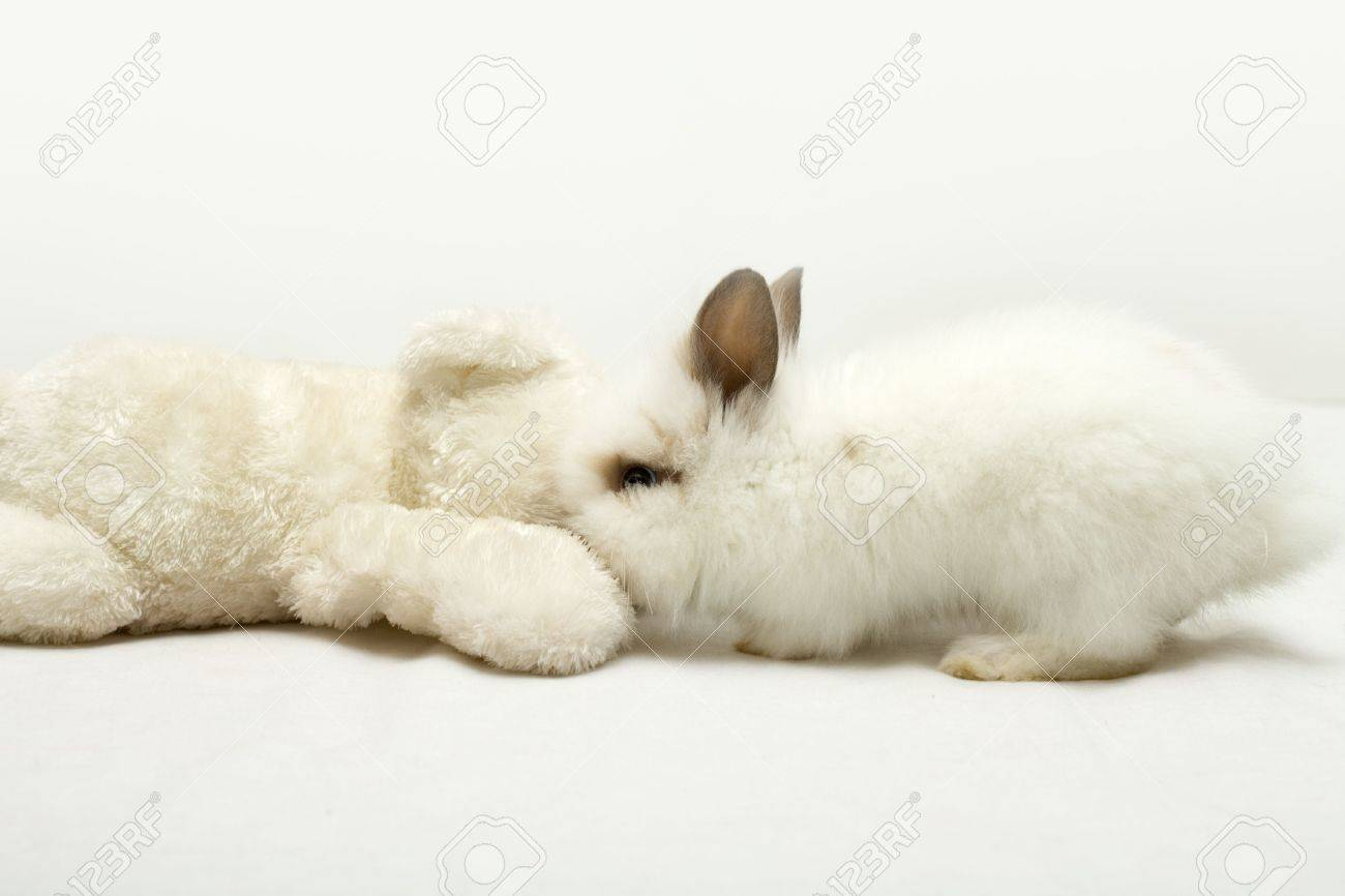 rabbit and teddy bear stock photo picture and royalty free image