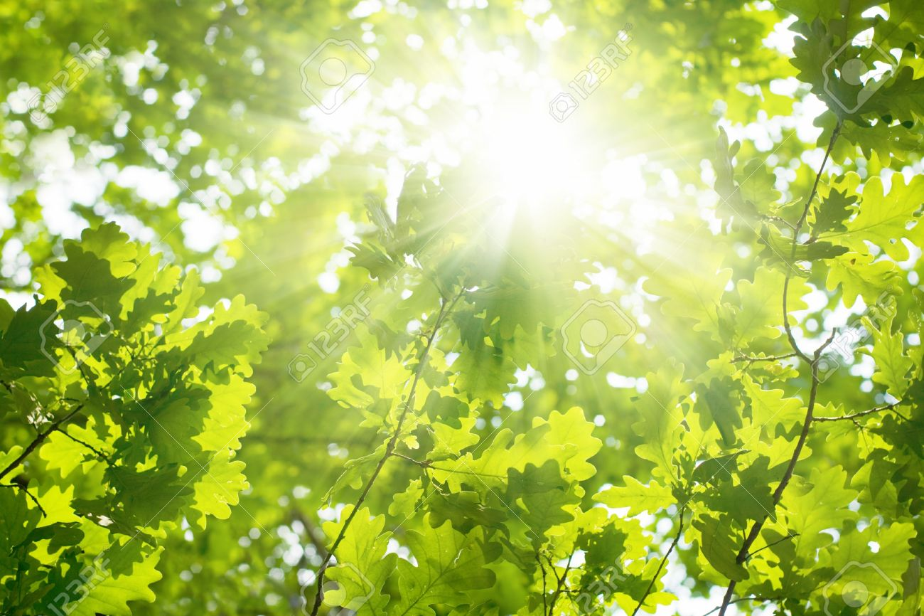 http://previews.123rf.com/images/_ig0rzh_/_ig0rzh_1201/_ig0rzh_120100002/11840158-Ecological-background-green-leaves-of-oak-bright-sun-Stock-Photo.jpg