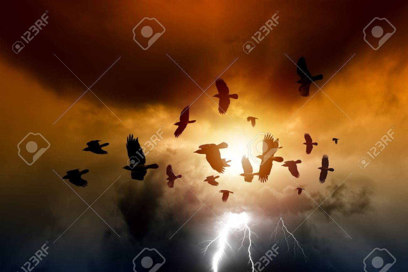Sunset, flock of flying ravens, crows in dark sky, bright lightning Stock Photo - 16108565