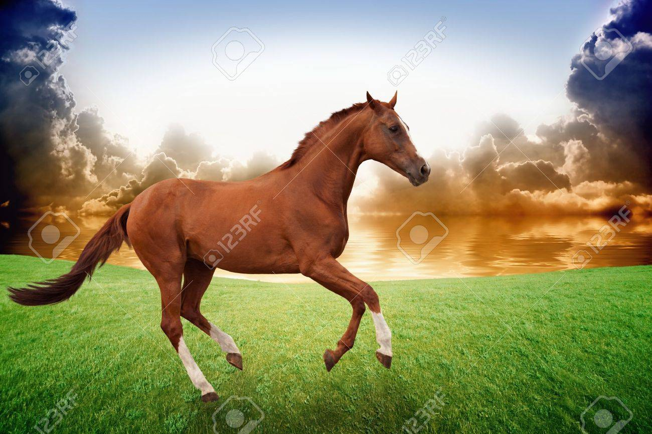 Peaceful Background Brown Horse Running On Green Grass Field Stock Photo Picture And Royalty Free Image Image 21914027
