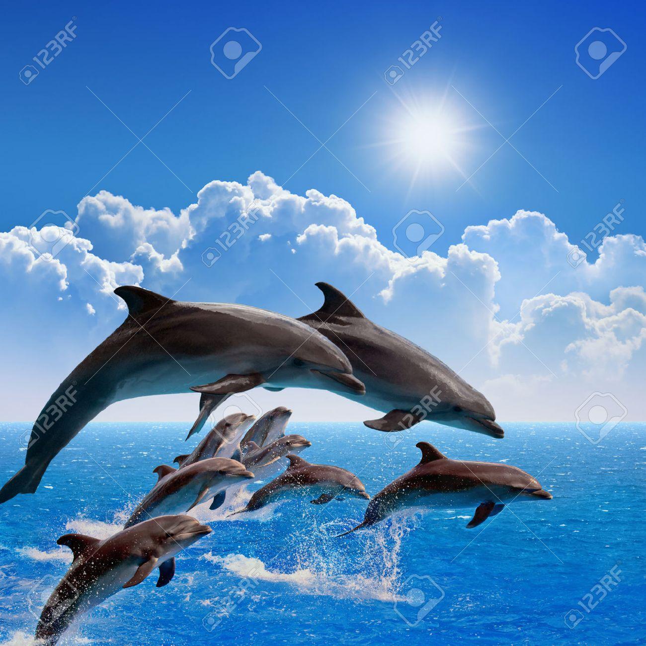 Favori Dauphins Sautant, Mer Bleue Et Le Ciel, Des Nuages ??blancs  OA32