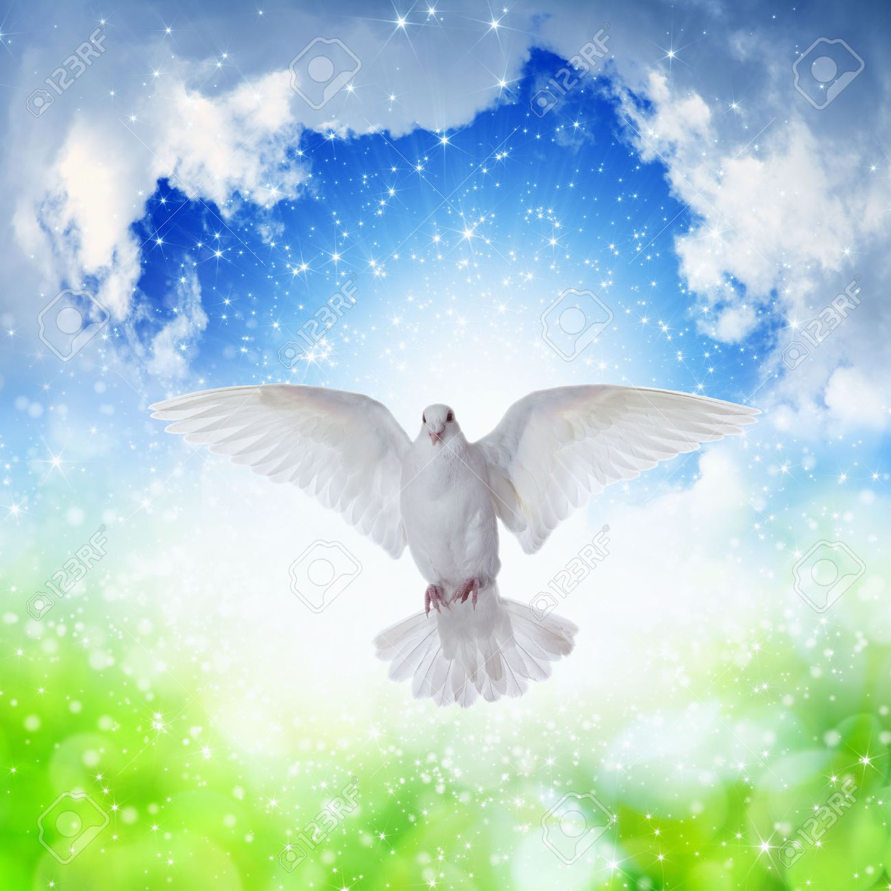 白い鳩のような、聖霊、聖霊鳩天...