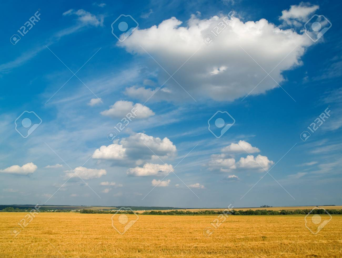 bright rural landscape with yellow fields and blue sky Stock Photo - 1584507