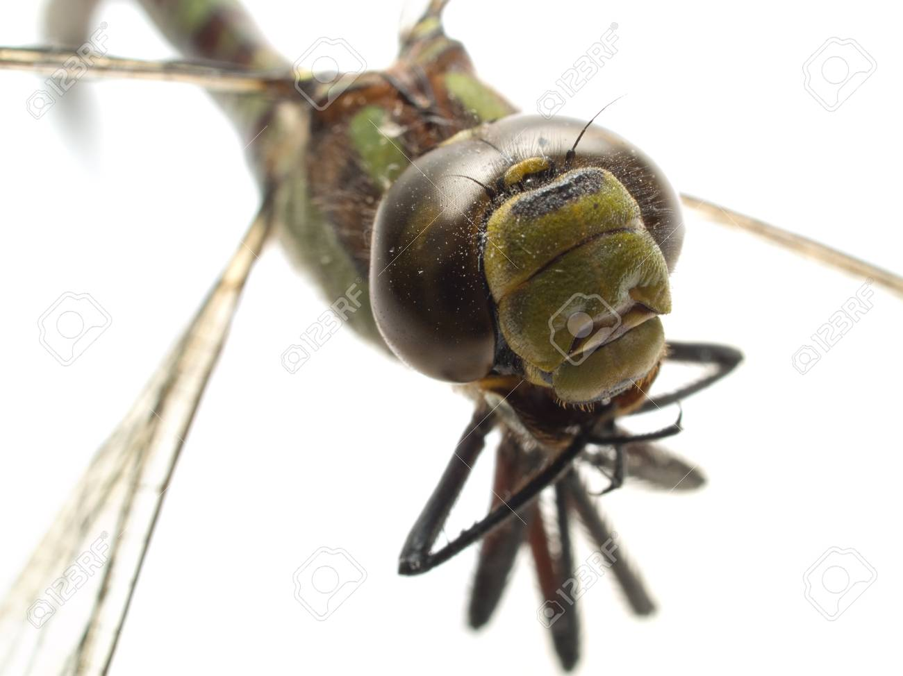 head part of dragonfly isolated on white close-up Stock Photo - 1592720