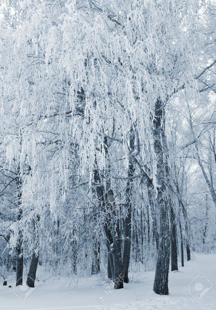 winter landscape with frozen forest. blue toned Stock Photo - 2461274