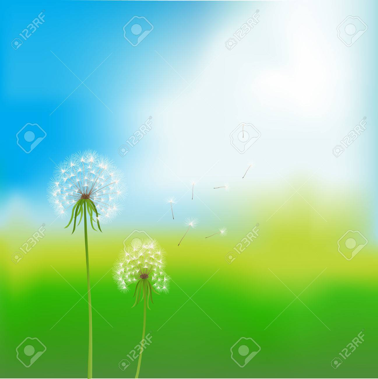 vector image. two dandelions over blurred summer background Stock Vector - 4643737
