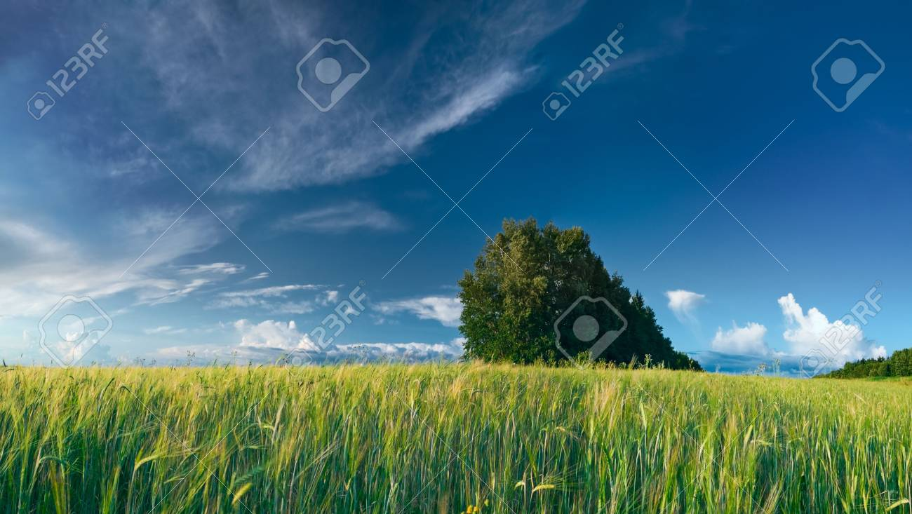 summer landscape with green grass meadows and blue sky Stock Photo - 5415422