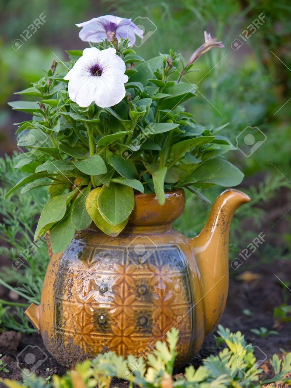 Fleurs De Petunia Dans Le Vieux Pot Exterieur Gros Plan