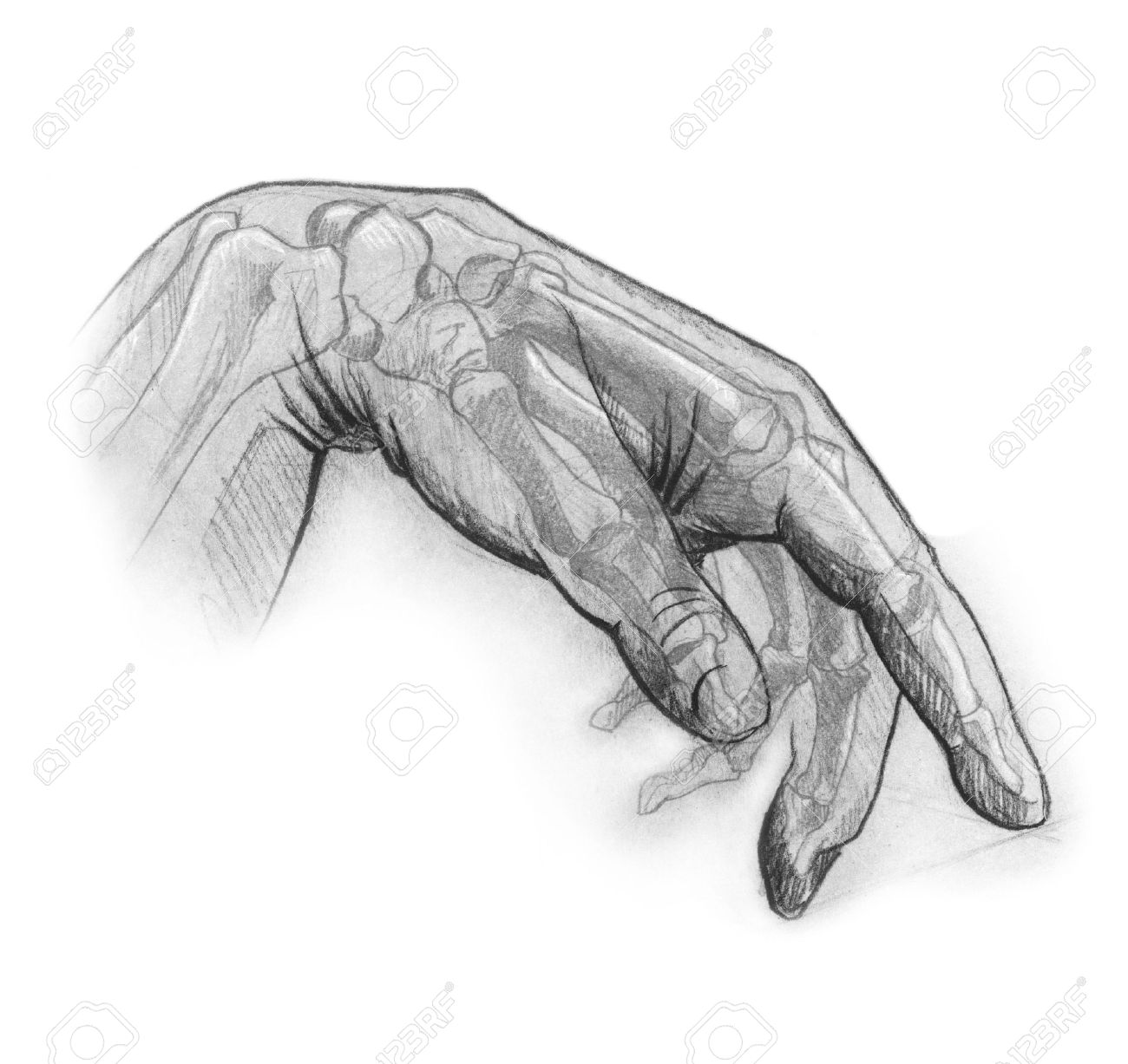 Pencil sketch of the human hand illustrates the internal and