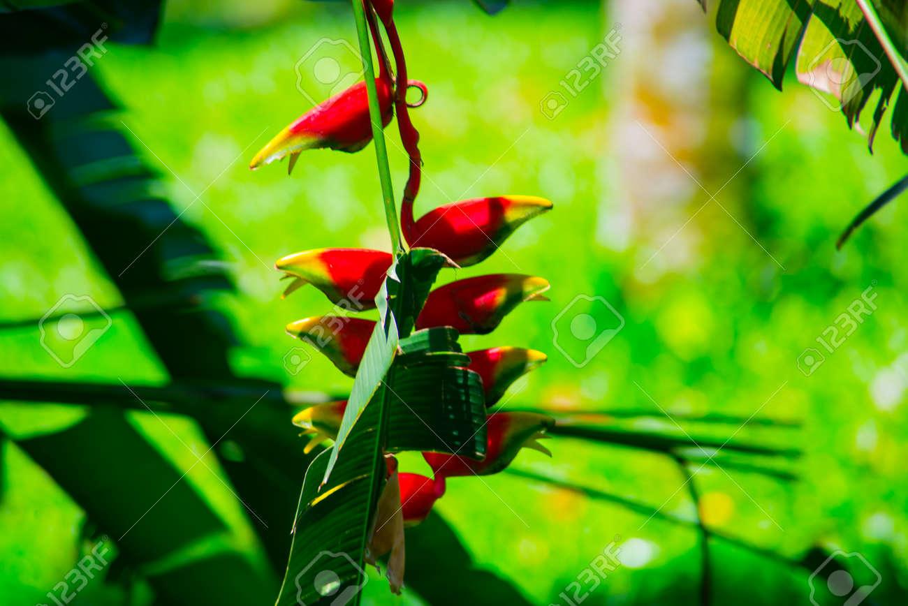 Tres Belles Fleurs Sont Agrandi Fleurs Fleurs Szelenyi Feuilles Banque D Images Et Photos Libres De Droits Image 65037913