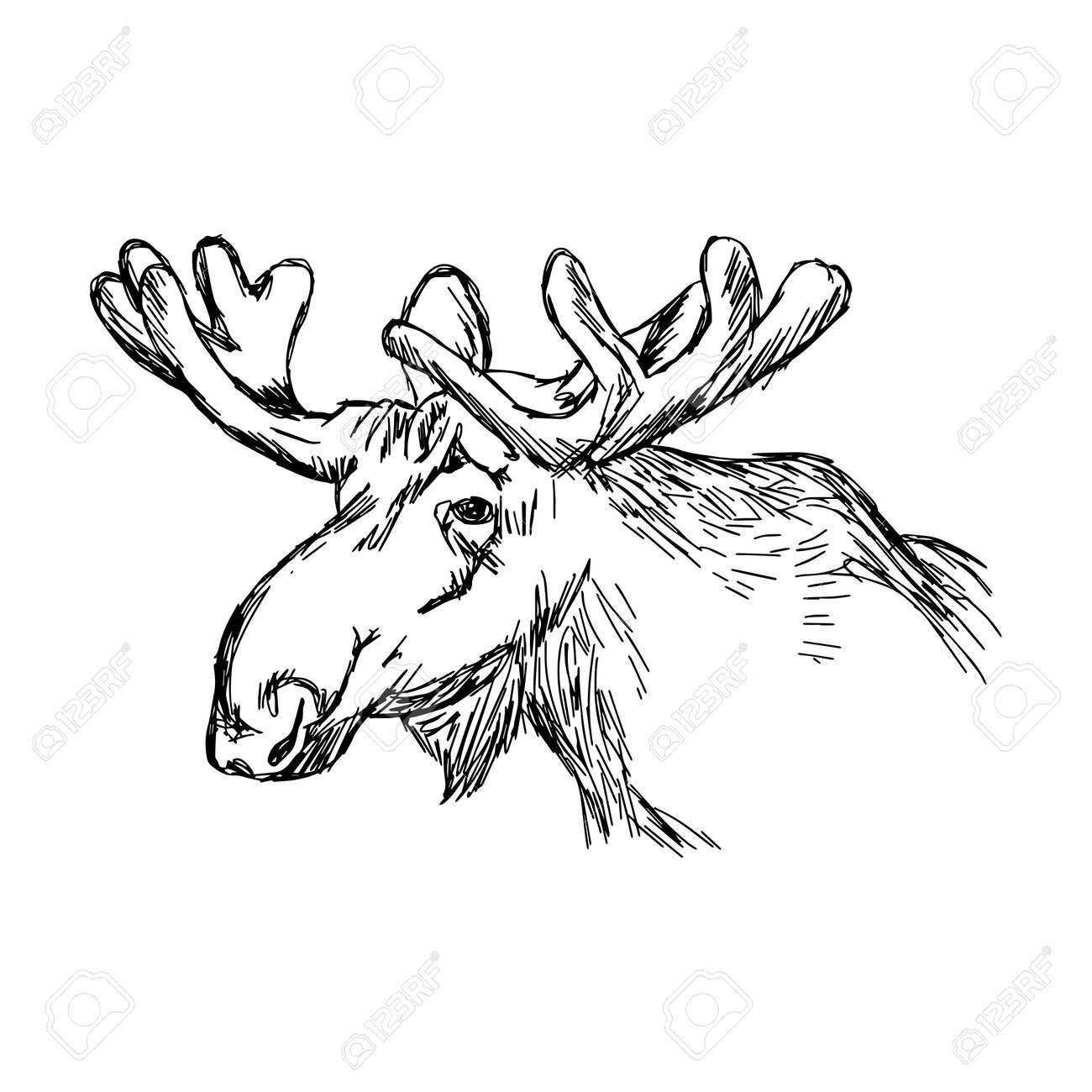 Illustration Doodle Skizze Elch Kopf Isoliert Auf Weißem Hintergrund ...