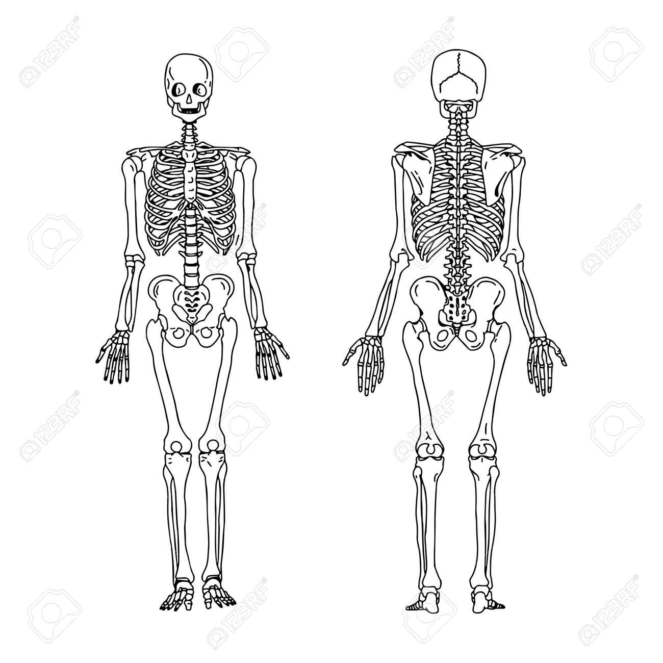Ilustración Vectorial Mano Dibujar Garabatos De Esqueleto Humano ...