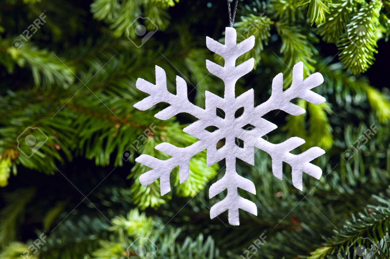 Snow flake shape Christmas ornament in fresh green Christmas tree Stock Photo - 14122397