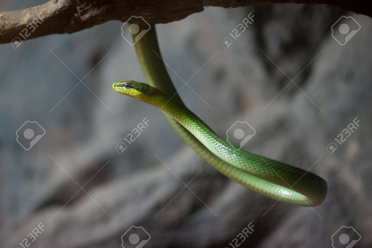 Animals in the zoo. that hit the green snake hanging down from the branches. Stock Photo - 9499289