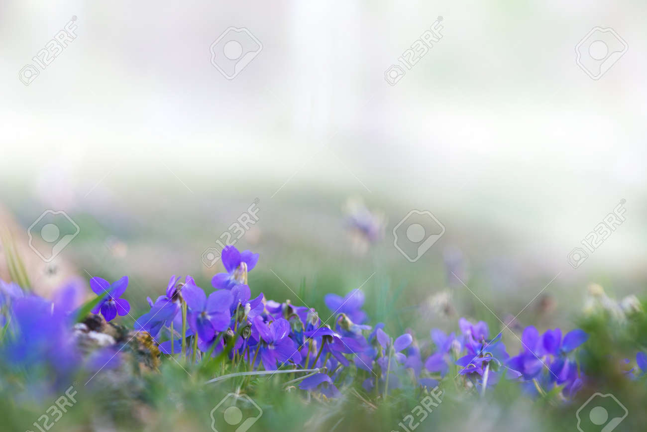 Fresh Spring Background With Tiny Blue Flowers At Grass Meadow Stock