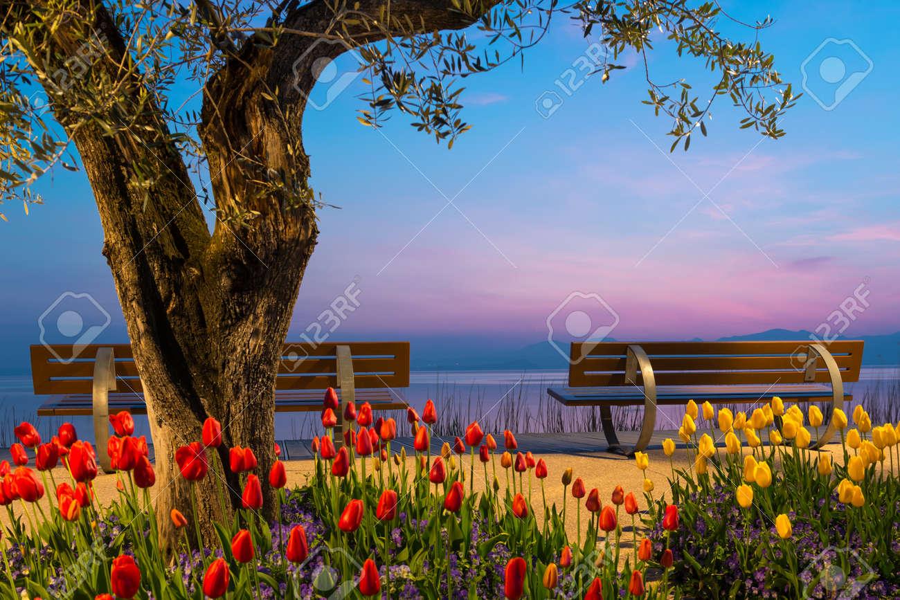 arbre avec des fleurs de tulipes et les deux banquettes avant lac