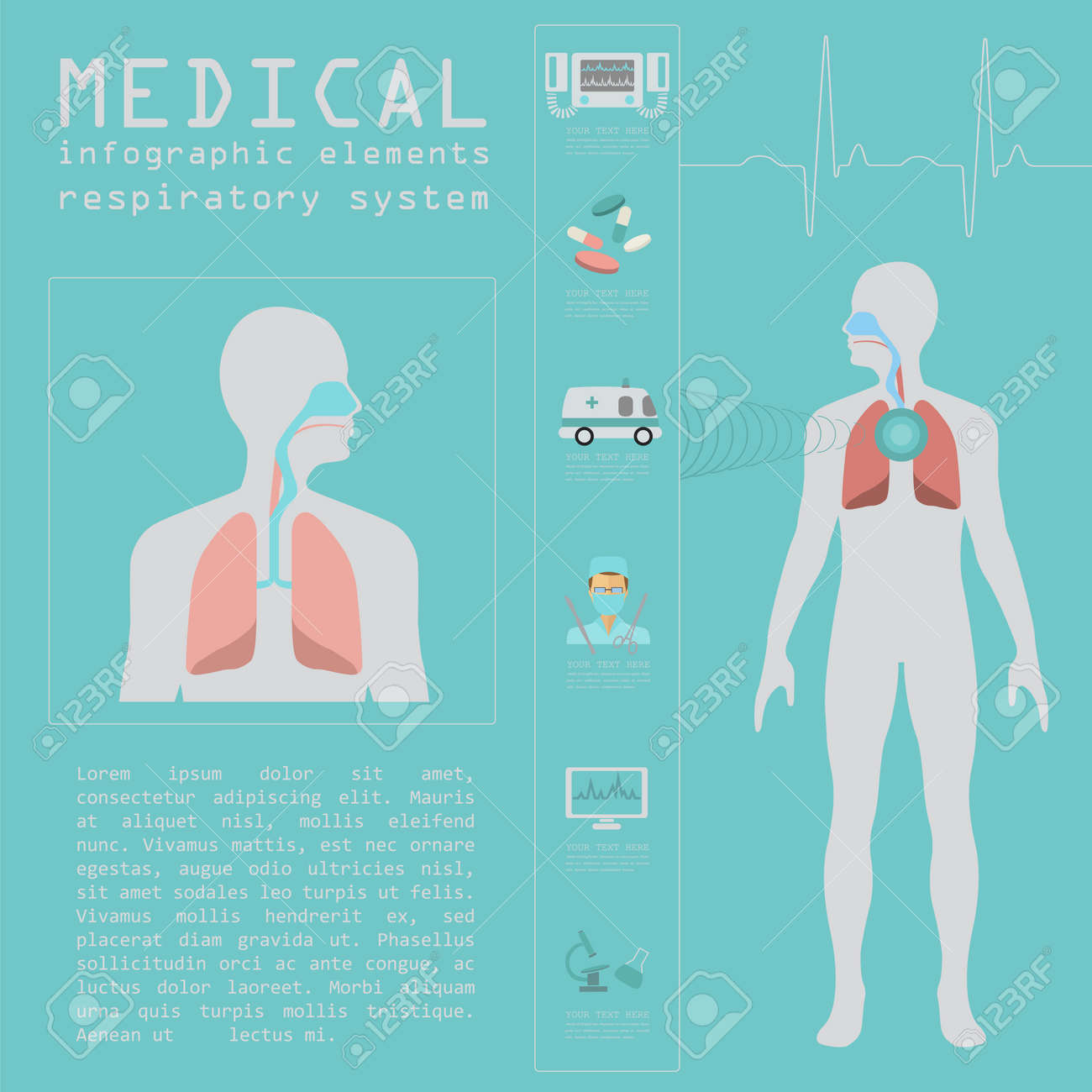 Respiratory system stock photos royalty free respiratory system images medical and healthcare infographic respiratory system infographics vector illustration ccuart Image collections