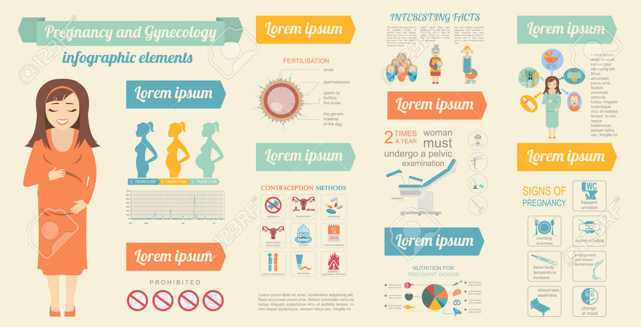 gynecology and pregnancy infographic template motherhood elements