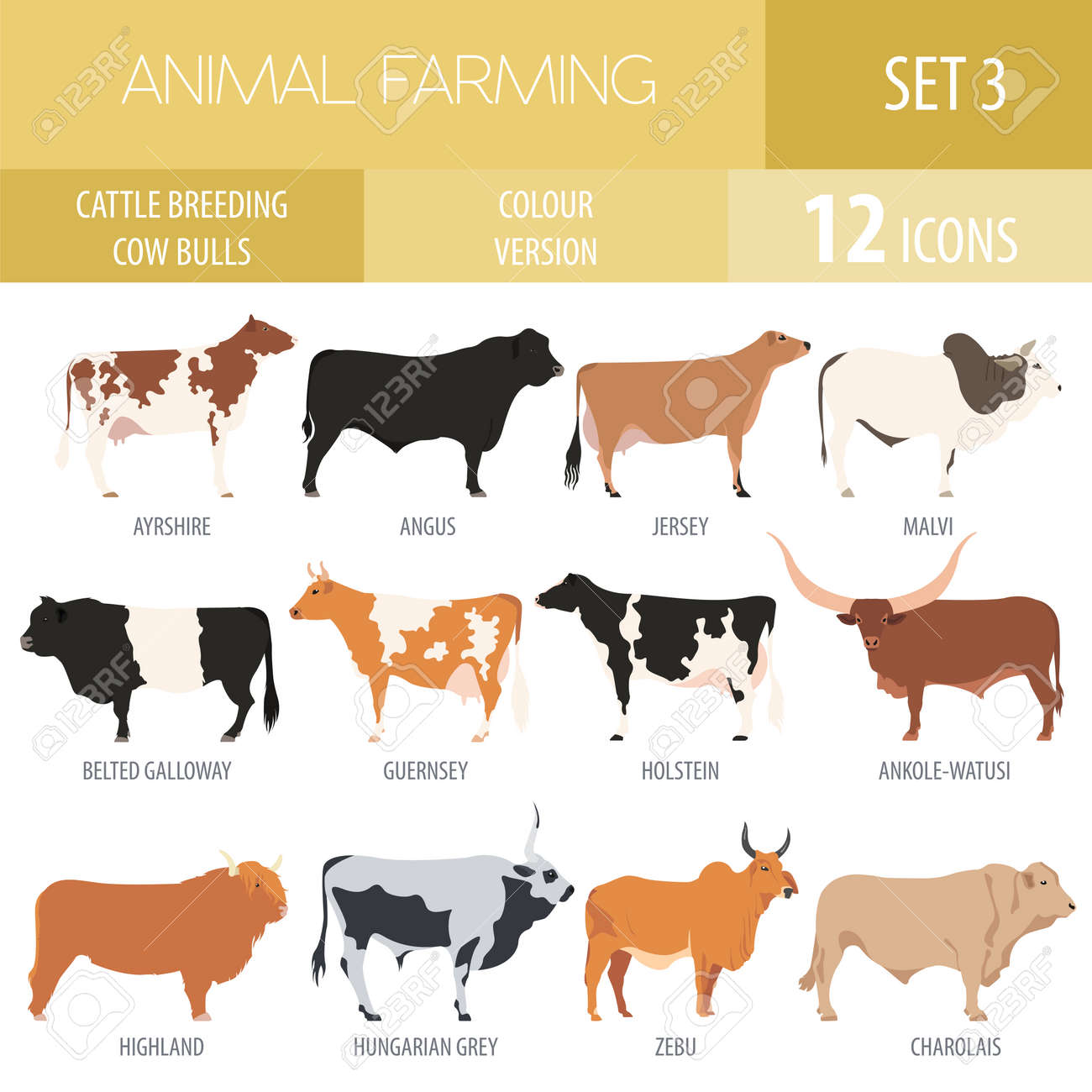 cattle breeding farming cow bulls breed icon set flat design