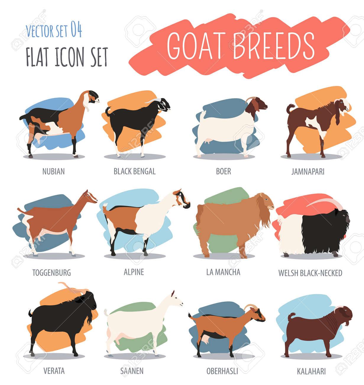 Goat breeds icon set  Animal farming  Flat design  Vector illustration