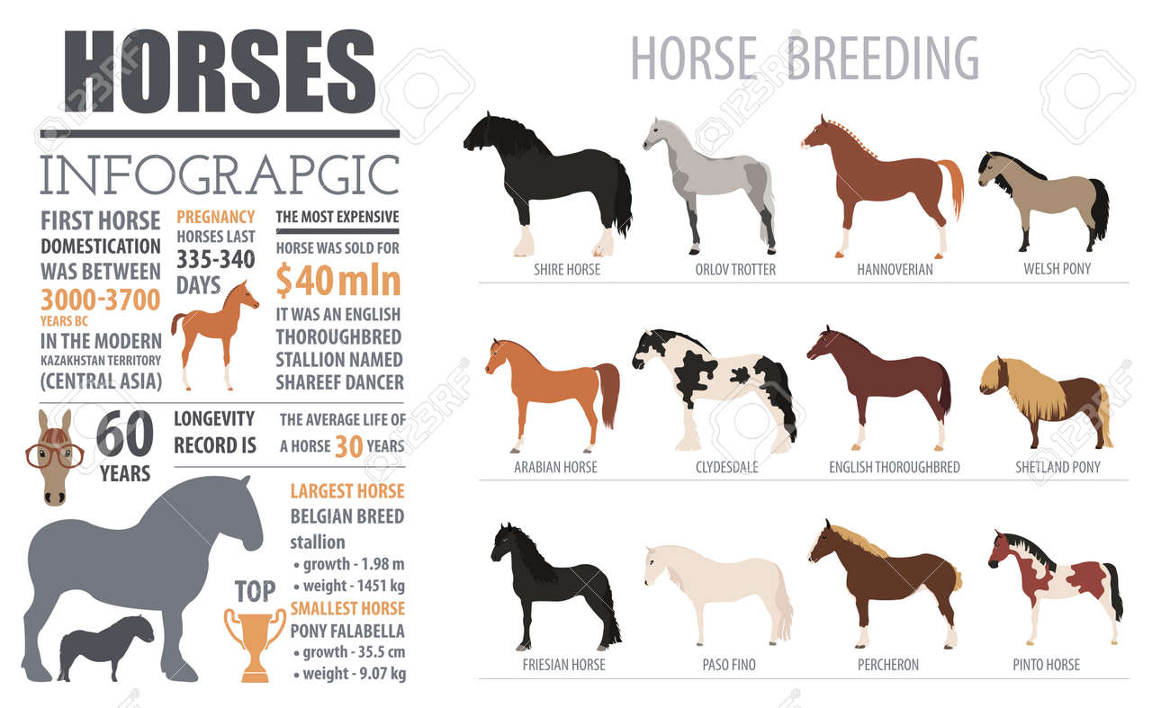 Horse breeding infographic template  Farm animal  Flat design