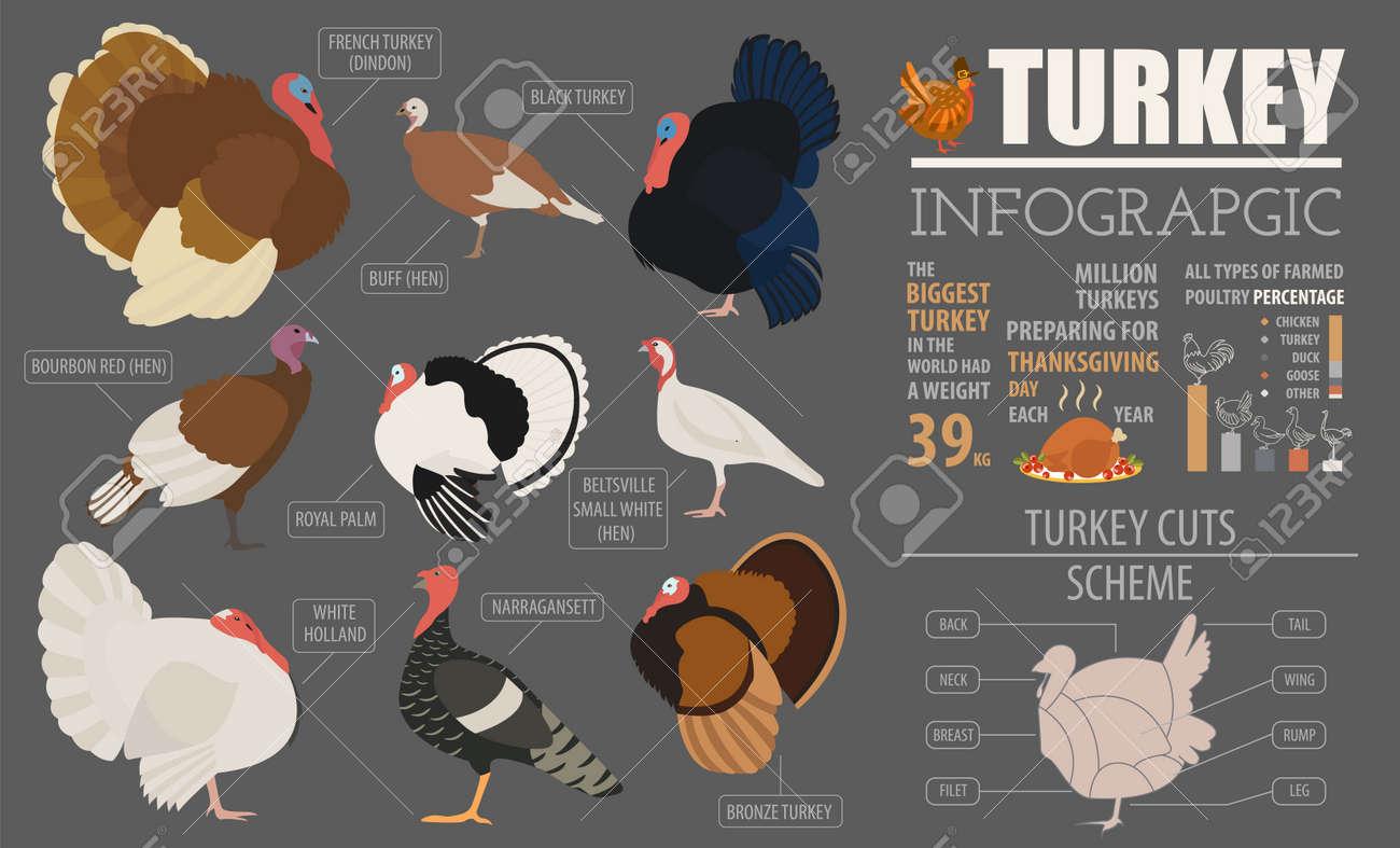 Beste Türkei Kopf Vorlage Fotos - Beispielzusammenfassung Ideen ...