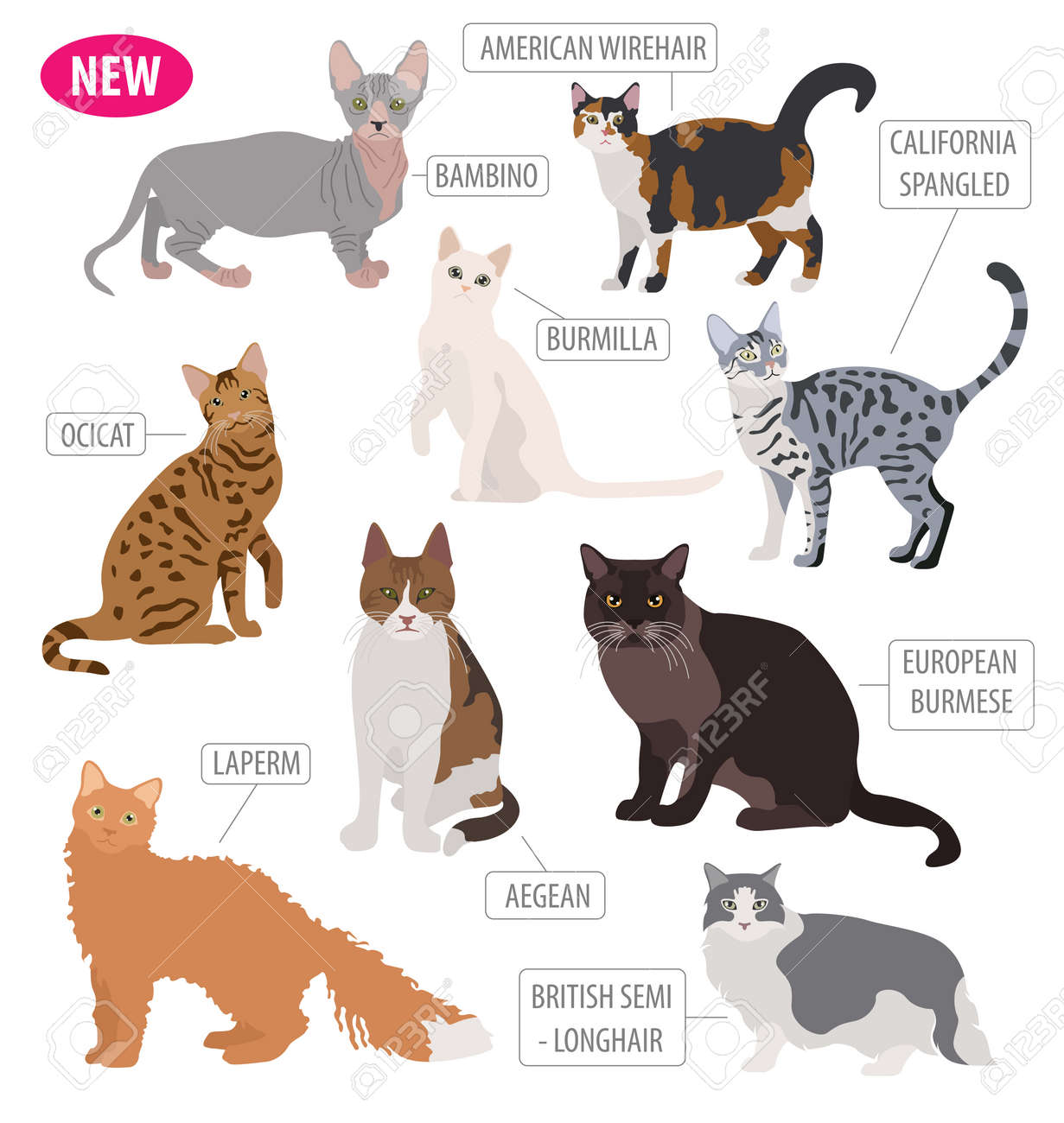 Cat Breeds Icon Set Flat Style Isolated On White. Create Own ...