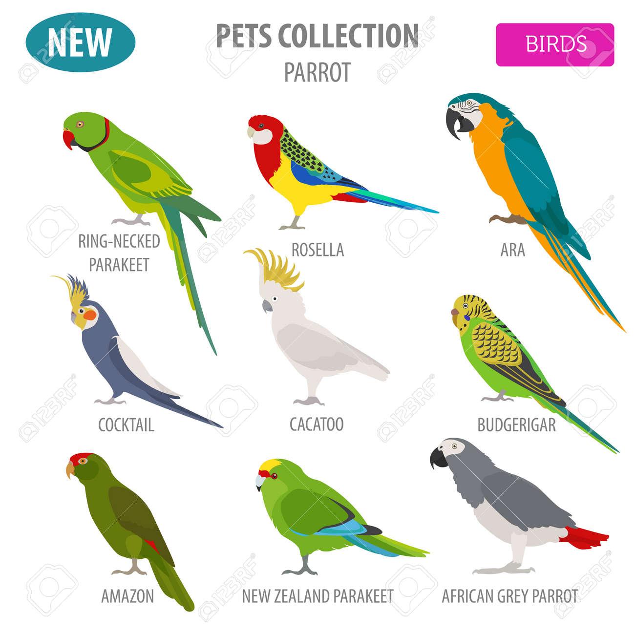Pet Birds Breeds Pet S Gallery