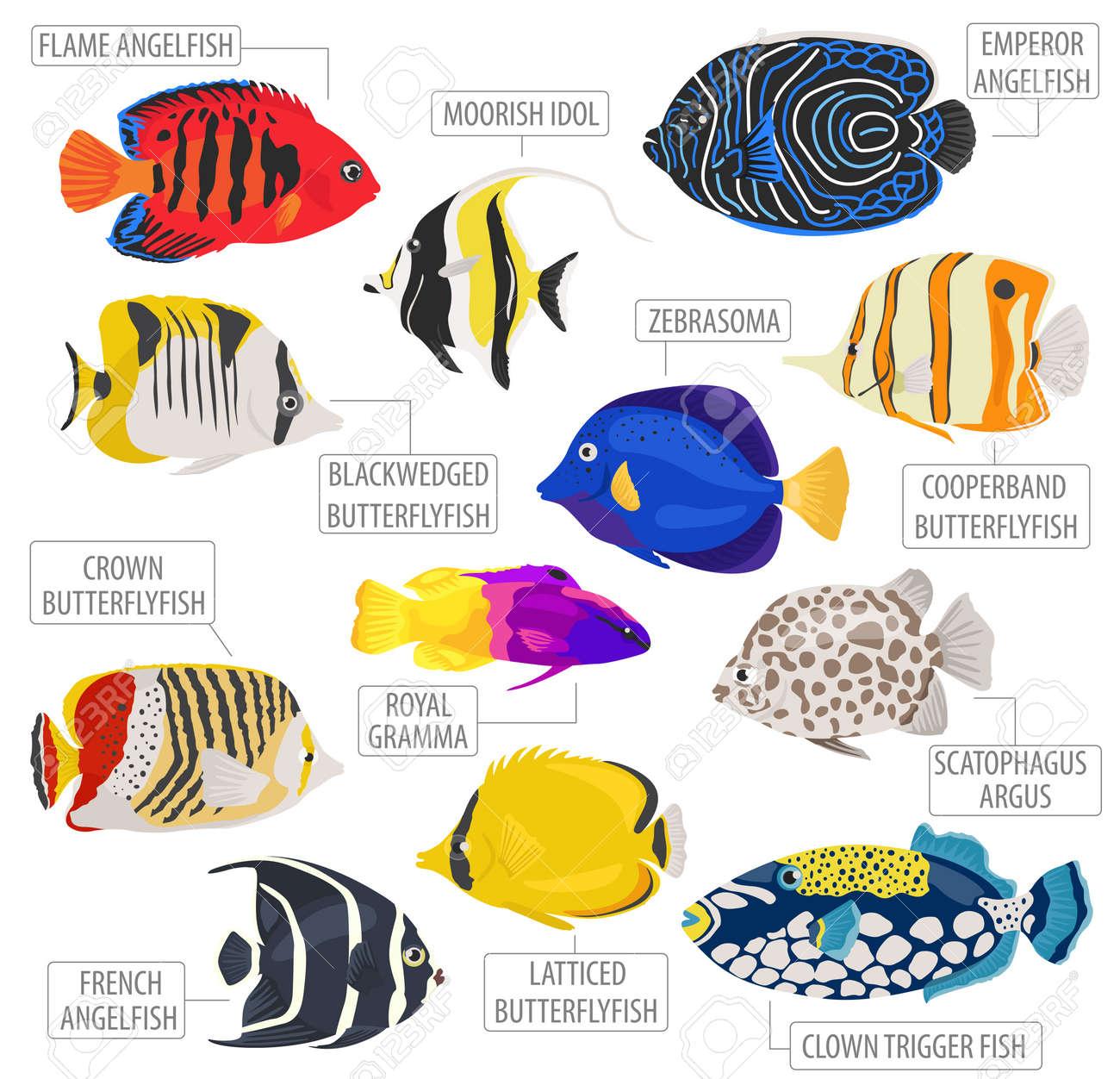 Freshwater Aquarium Fish Breeds Icon Set Flat Style Isolated